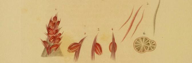 plantas_test_primavera